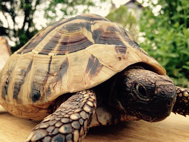 Chov želvy Zelenavé