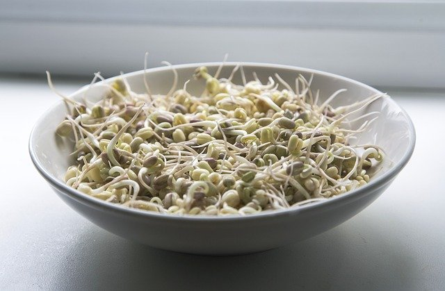 naklíčené fazolky mungo